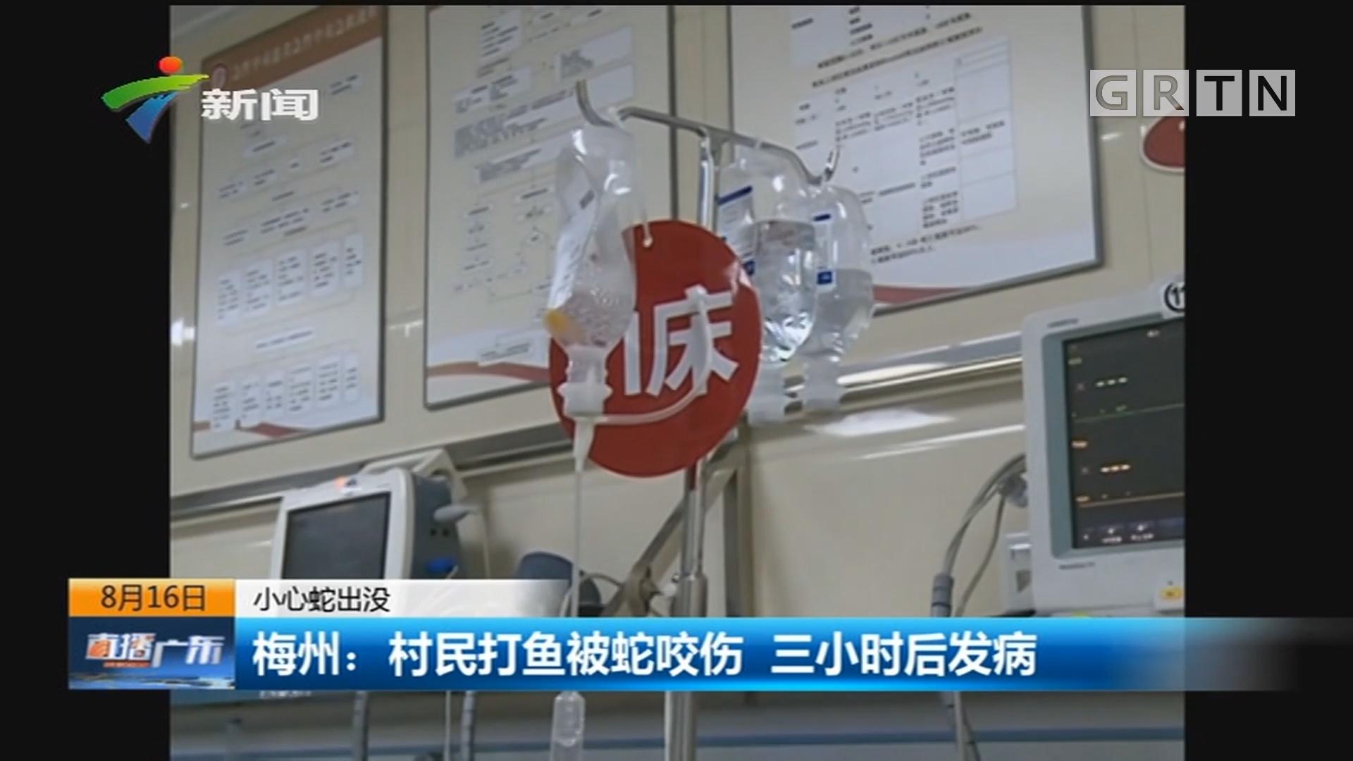 小心蛇出没 梅州:村民打鱼被蛇咬伤 三小时后发病
