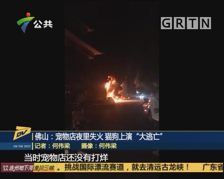 """佛山:宠物店夜里失火 猫狗上演""""大逃亡"""""""
