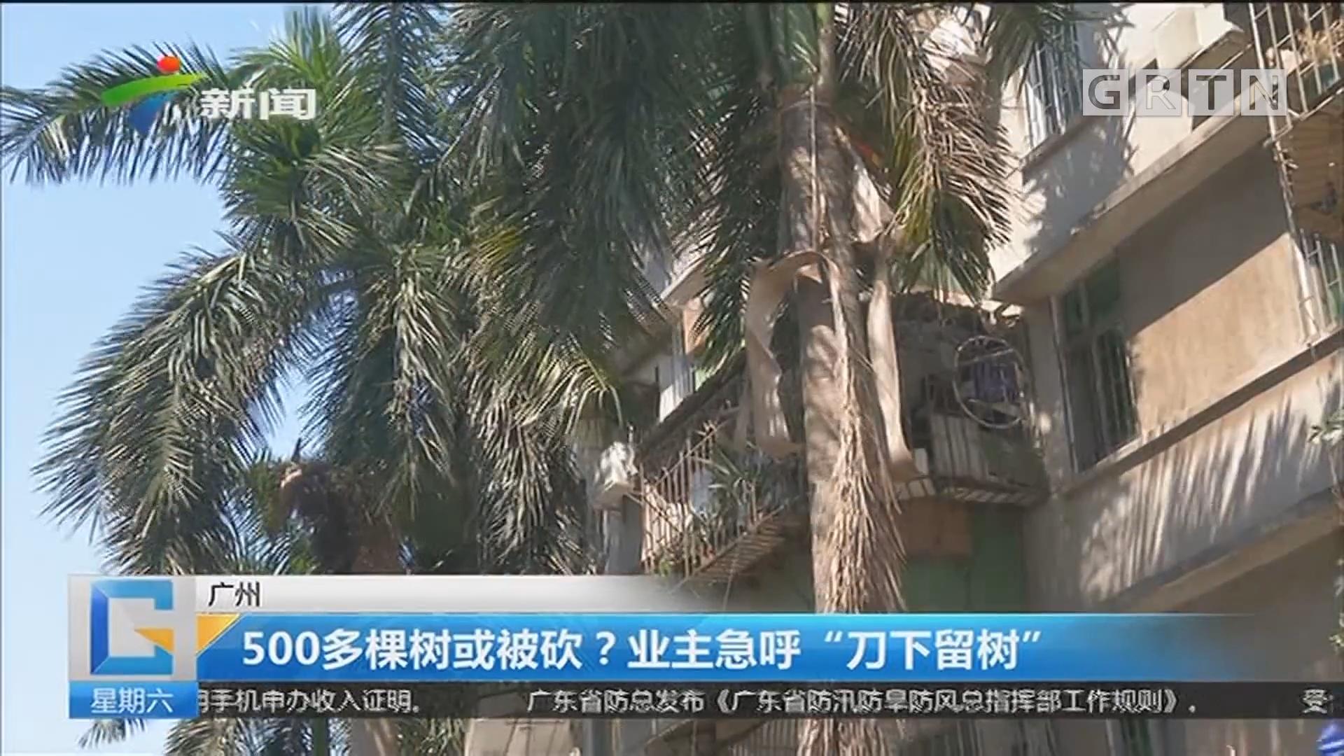 """广州:500多棵树或被砍?业主急呼""""刀下留树"""""""