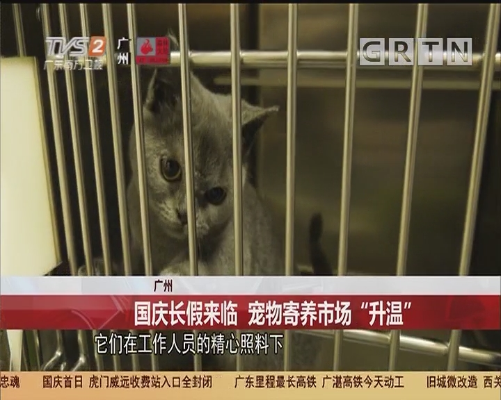 """广州:国庆长假来临 宠物寄养市场""""升温"""""""