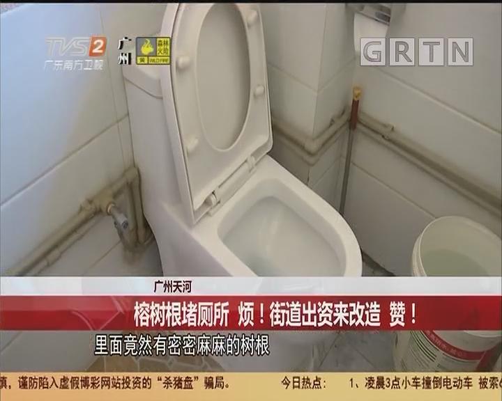 广州天河:榕树根堵厕所 烦!街道出资来改造 赞!