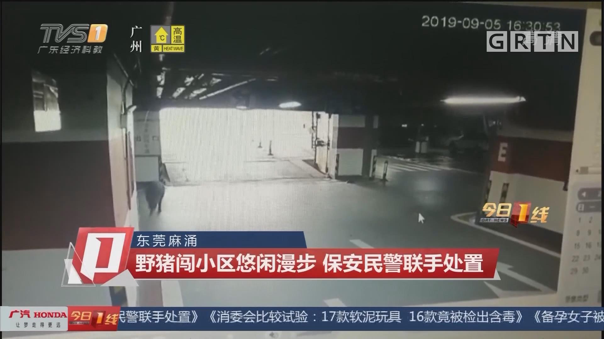 东莞麻涌:野猪闯小区悠闲漫步 保安民警联手处置