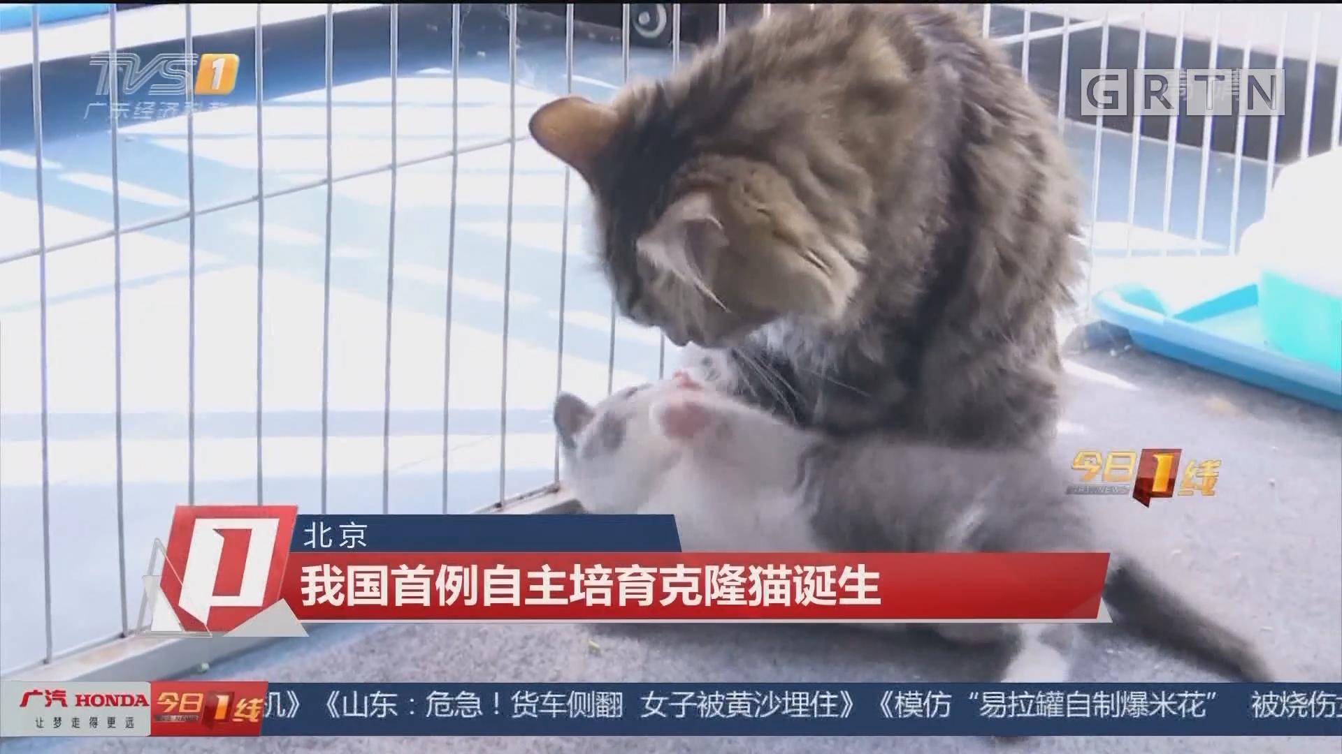 北京:我国首例自主培育克隆猫诞生