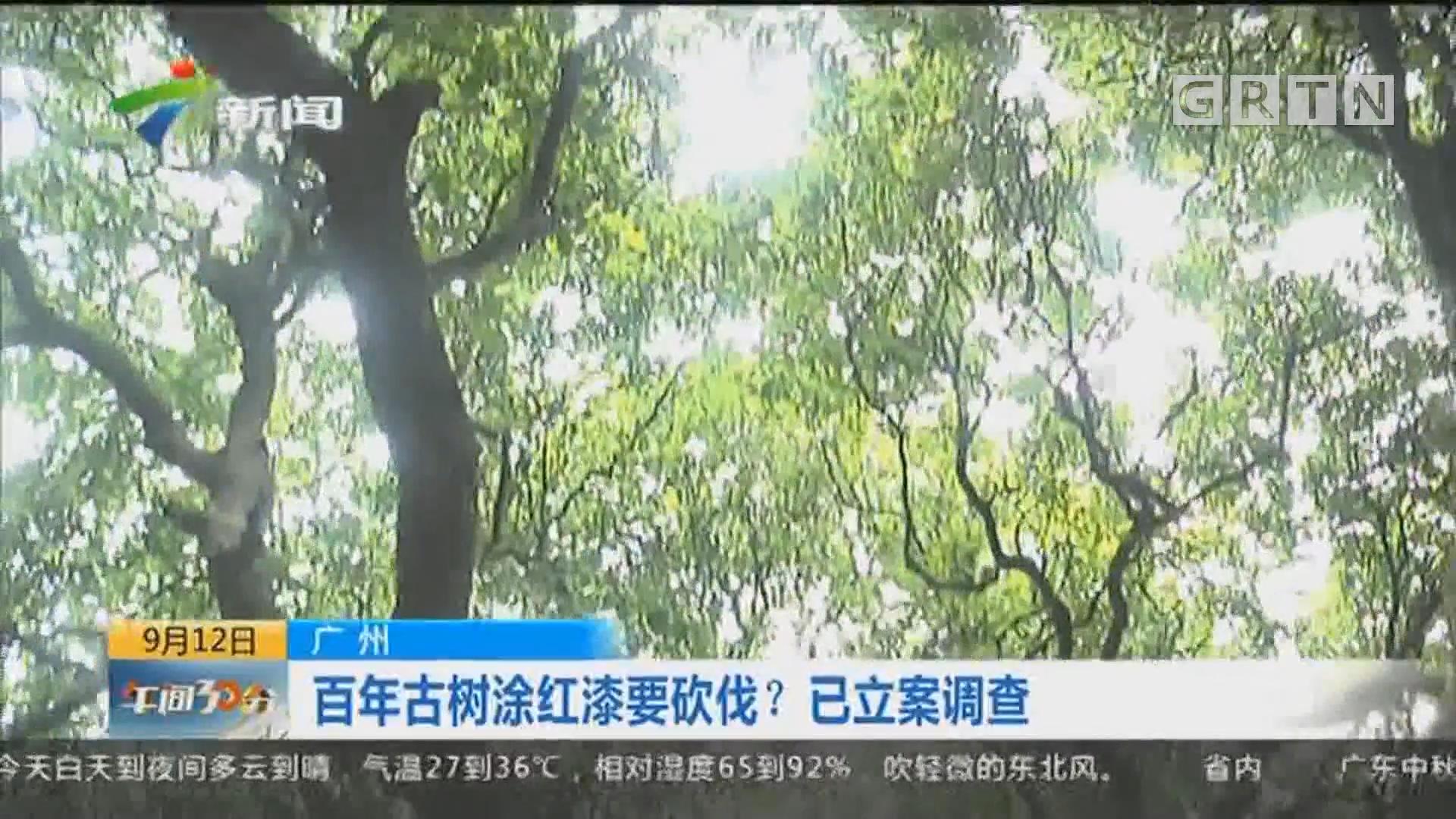广州:百年古树涂红漆要砍伐?已立案调查