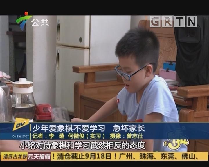 (DV现场)少年爱象棋不爱学习 急坏家长