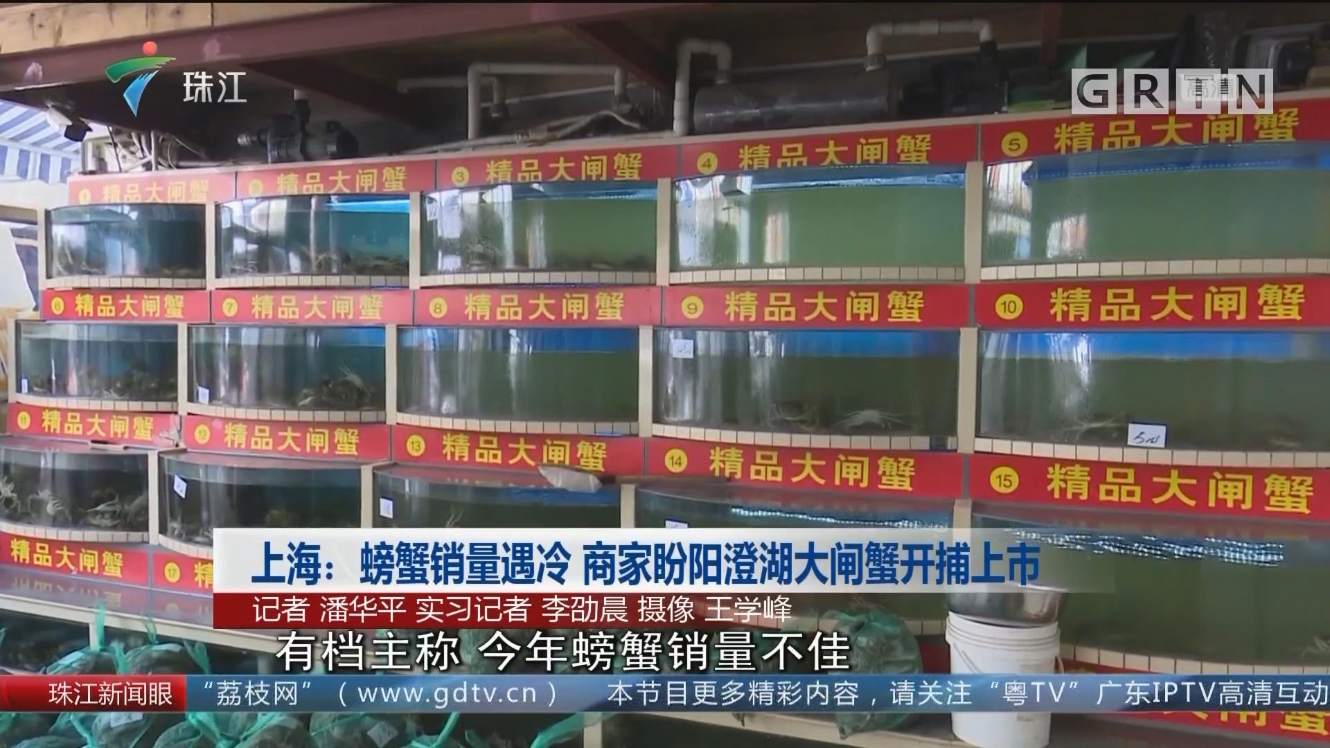 上海:螃蟹销量遇冷 商家盼阳澄湖大闸蟹开捕上市