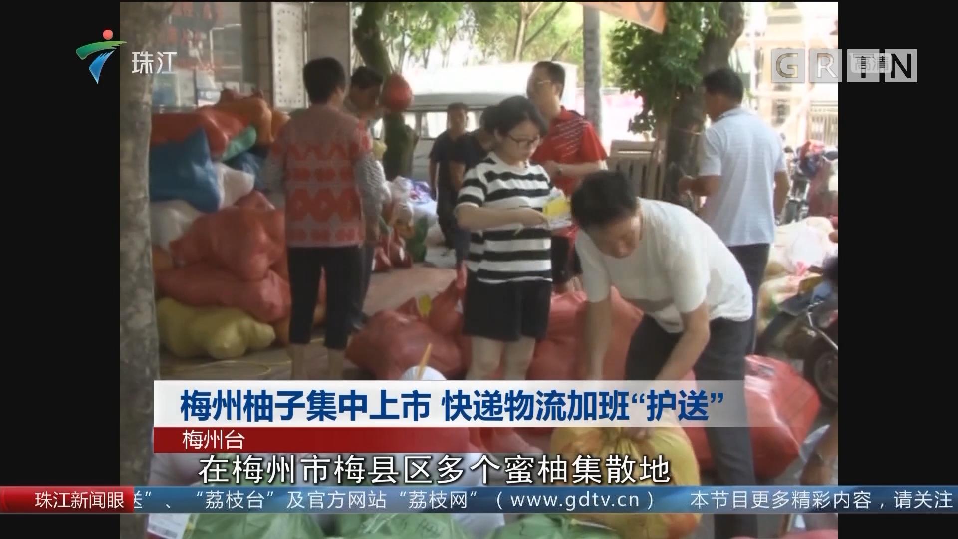 """梅州柚子集中上市 快递物流加班""""护送"""""""