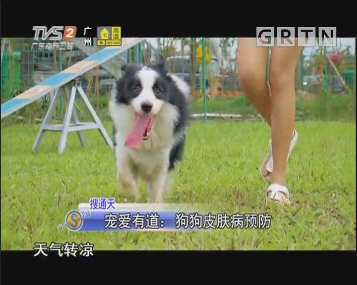 搜通天 宠爱有道:狗狗皮肤病预防