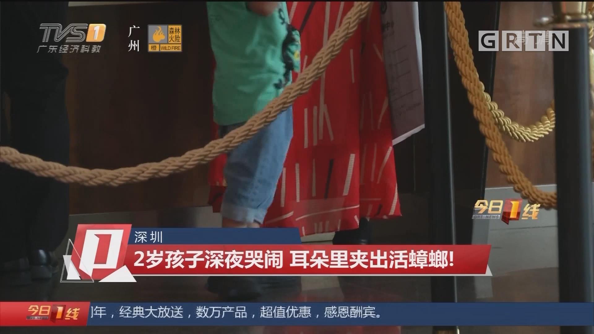 深圳:2岁孩子深夜哭闹 耳朵里夹出活蟑螂!