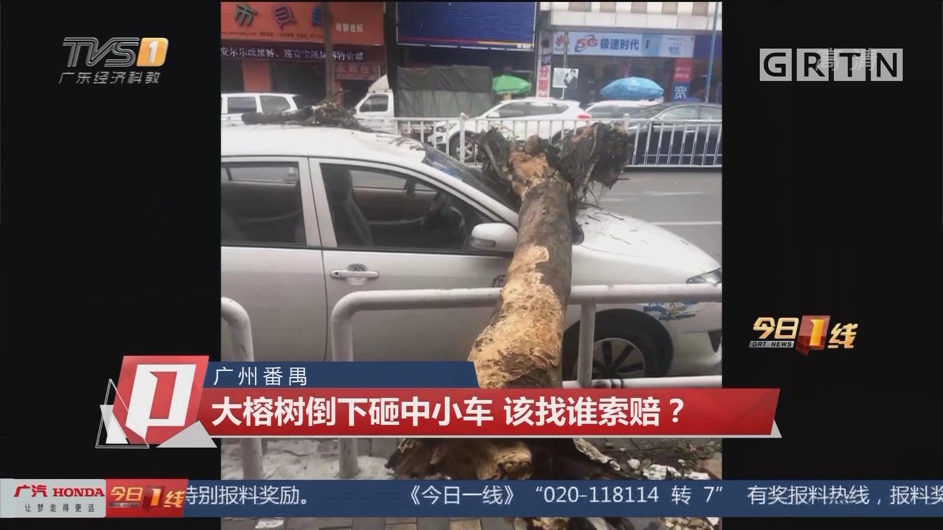 广州番禺:大榕树倒下砸中小车 该找谁索赔?