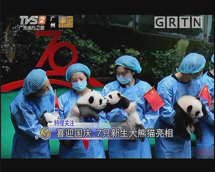 喜迎国庆 7只新生大熊猫亮相
