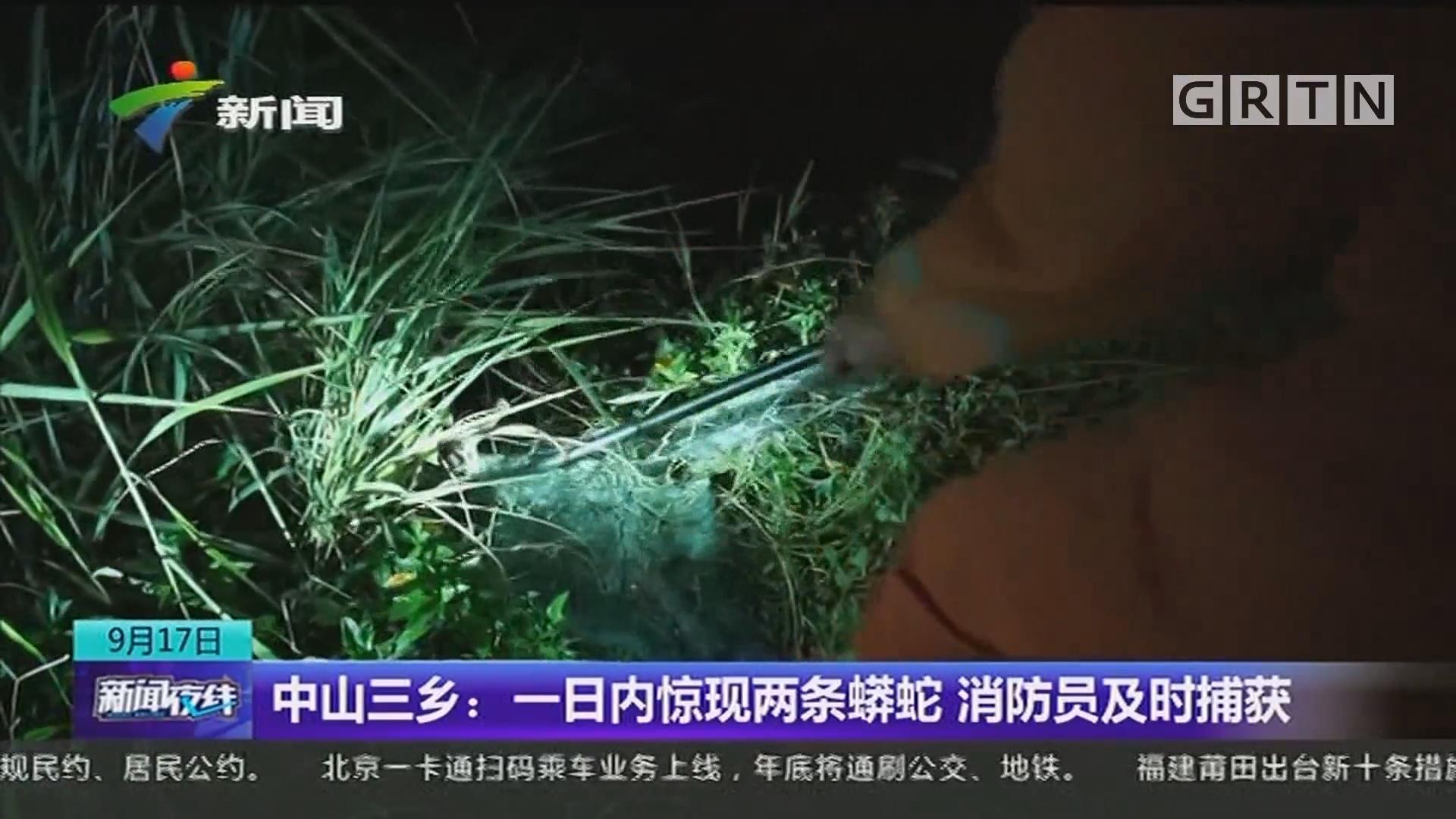 中山三乡:一日内惊现两条蟒蛇 消防员及时捕获