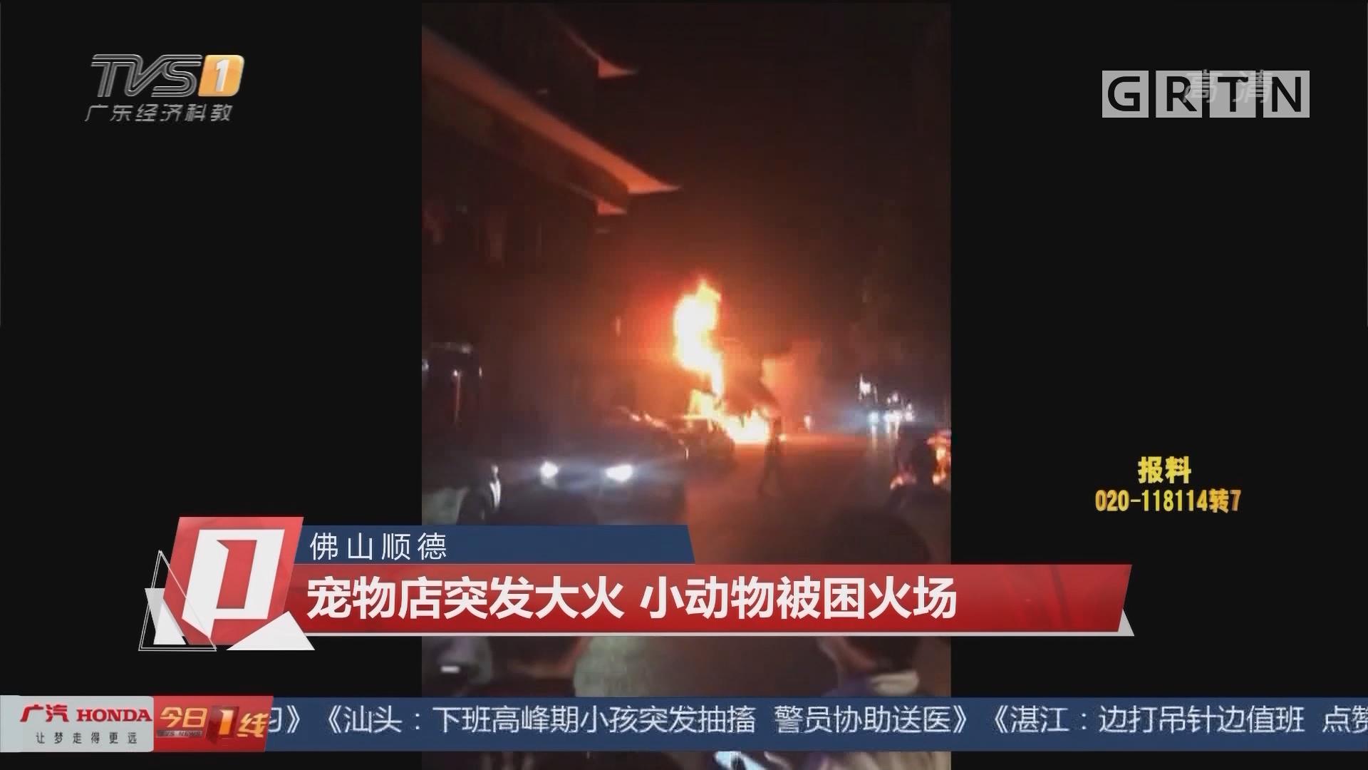 佛山順德:寵物店突發大火 小動物被困火場