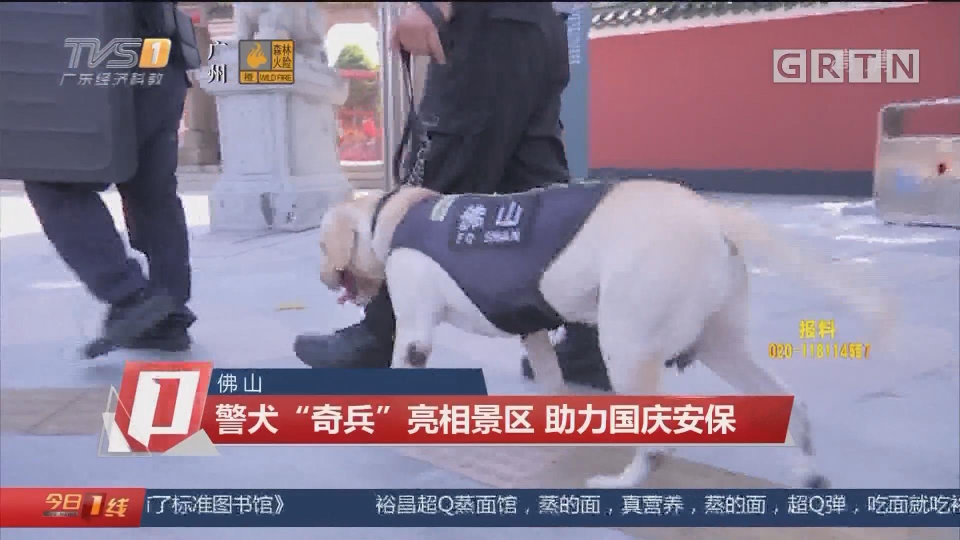 """佛山:警犬""""奇兵""""亮相景区 助力国庆安保"""