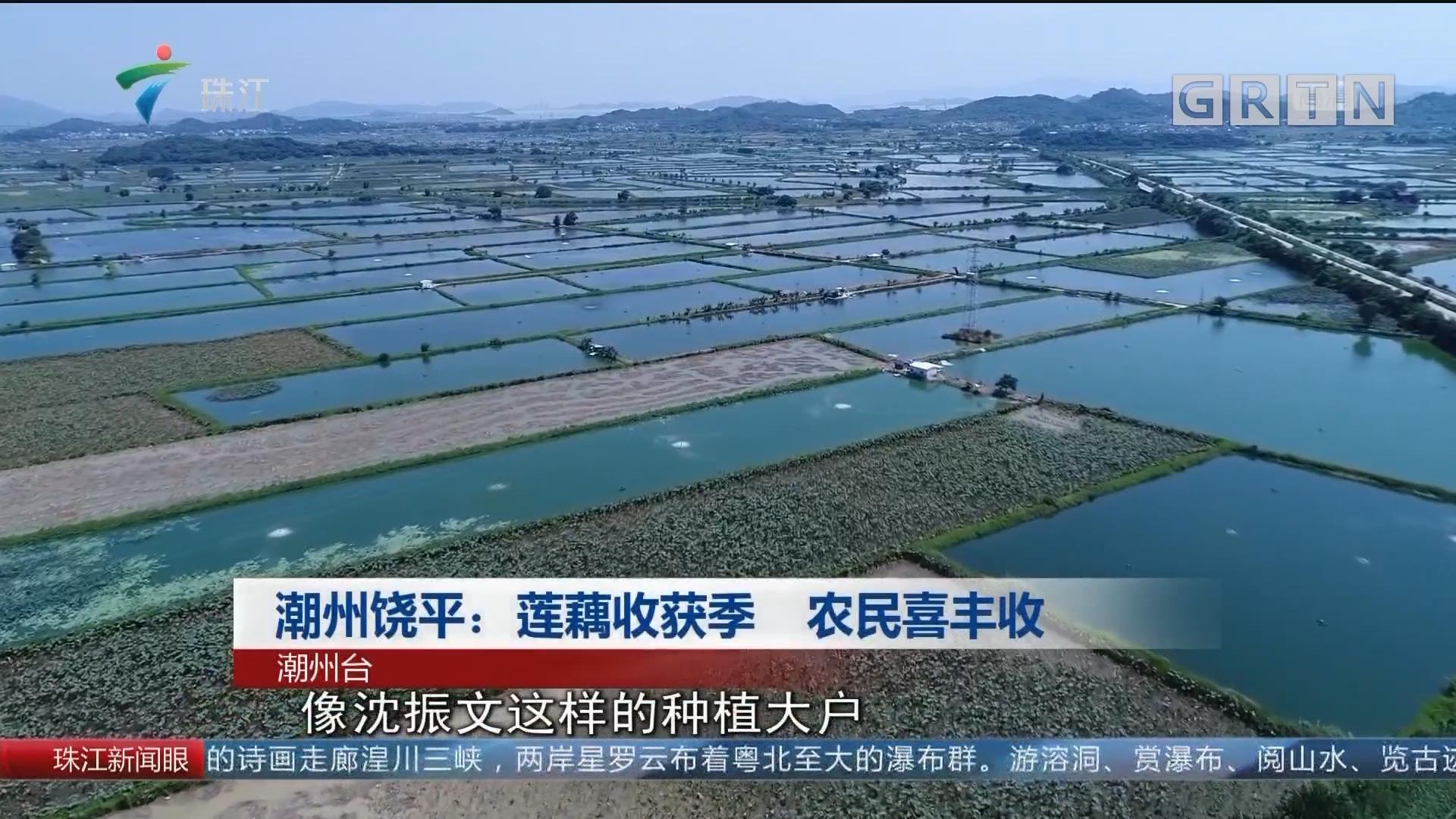 潮州饶平:莲藕收获季 农民喜丰收