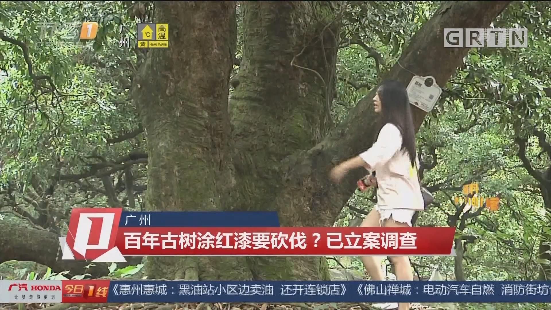 广州 百年古树涂红漆要砍伐?已立案调查