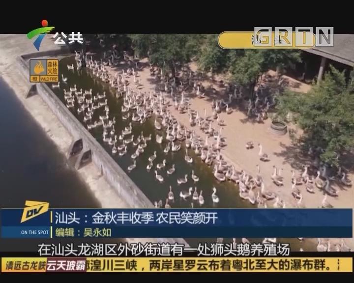 (DV现场)汕头:金秋丰收季 农民笑颜开