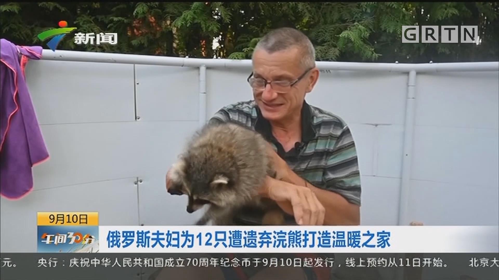 俄罗斯夫妇为12只遭遗弃浣熊打造温暖之家