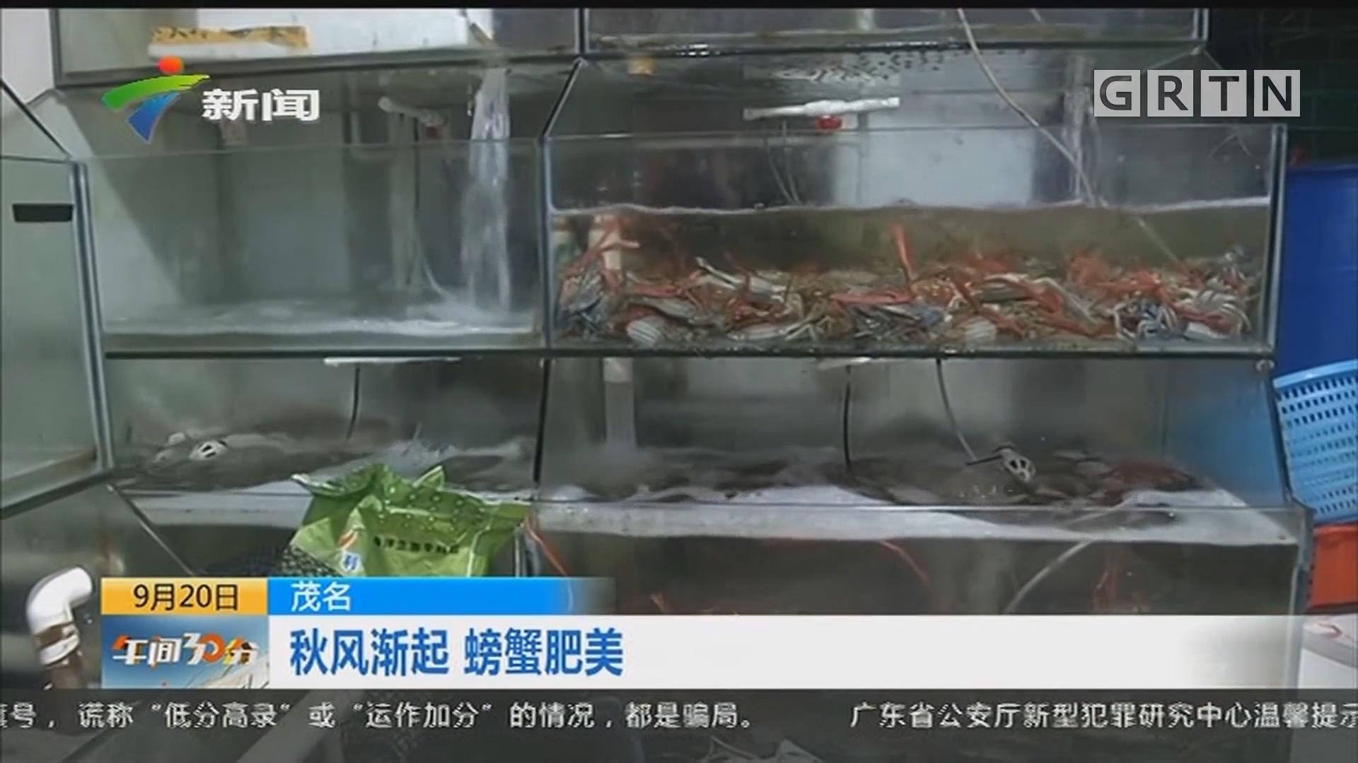 茂名:秋风渐起 螃蟹肥美