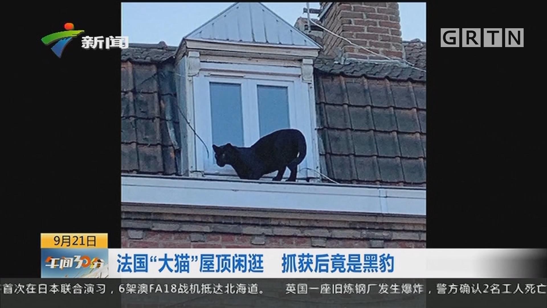 """法国""""大猫""""屋顶闲逛 抓获后竟是黑豹"""