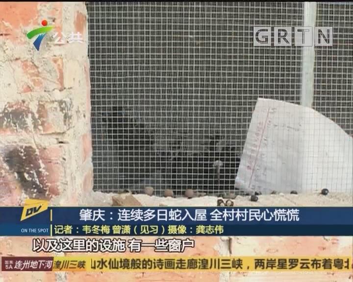 (DV现场)肇庆:连续多日蛇入屋 全村村民心慌慌