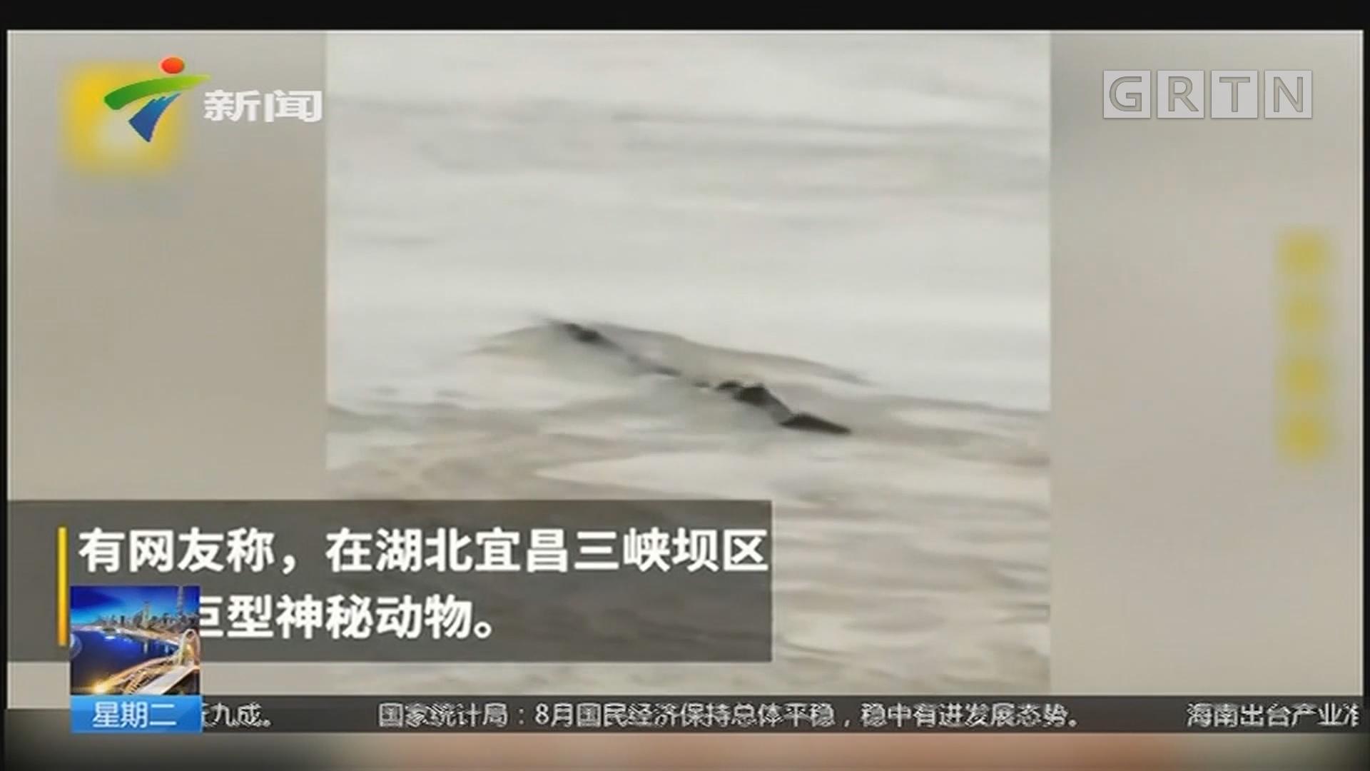 """安徽池州:网传""""三峡现水怪"""" 原来只是遮阳网"""