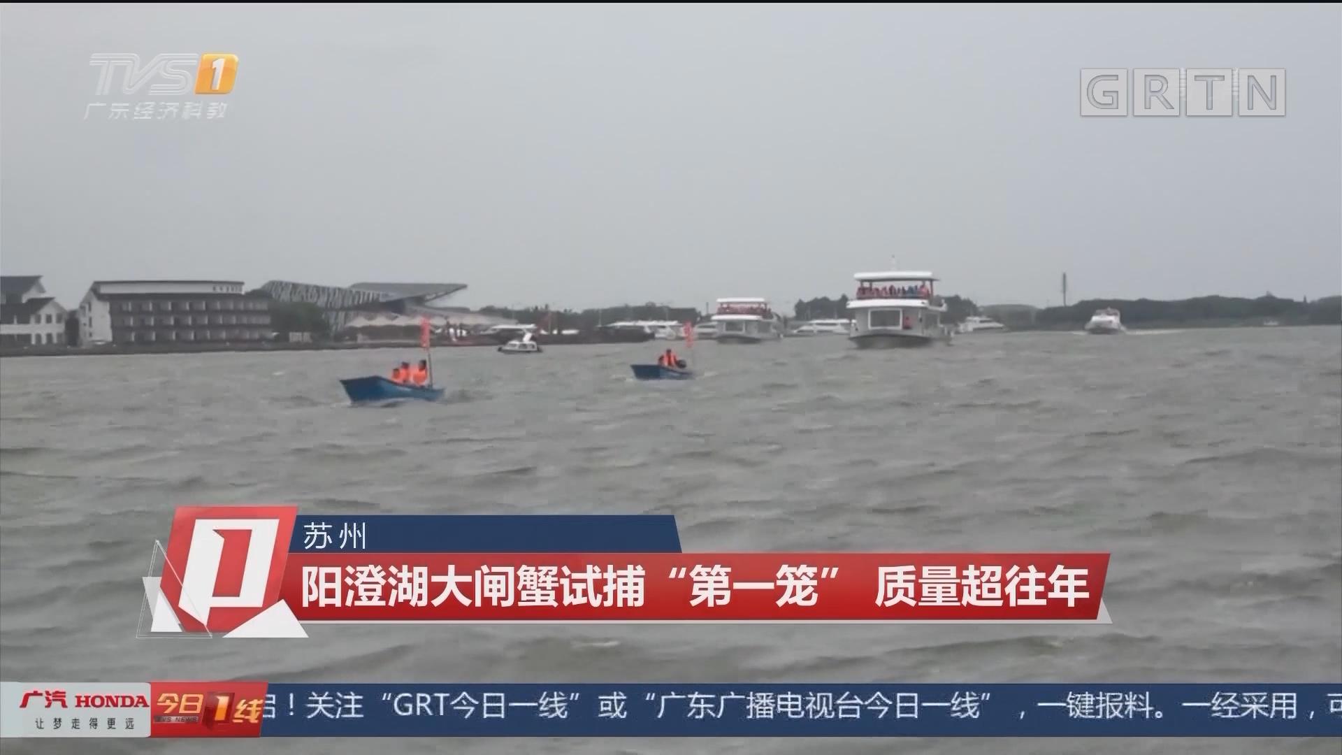 """蘇州:陽澄湖大閘蟹試捕""""第一籠"""" 質量超往年"""