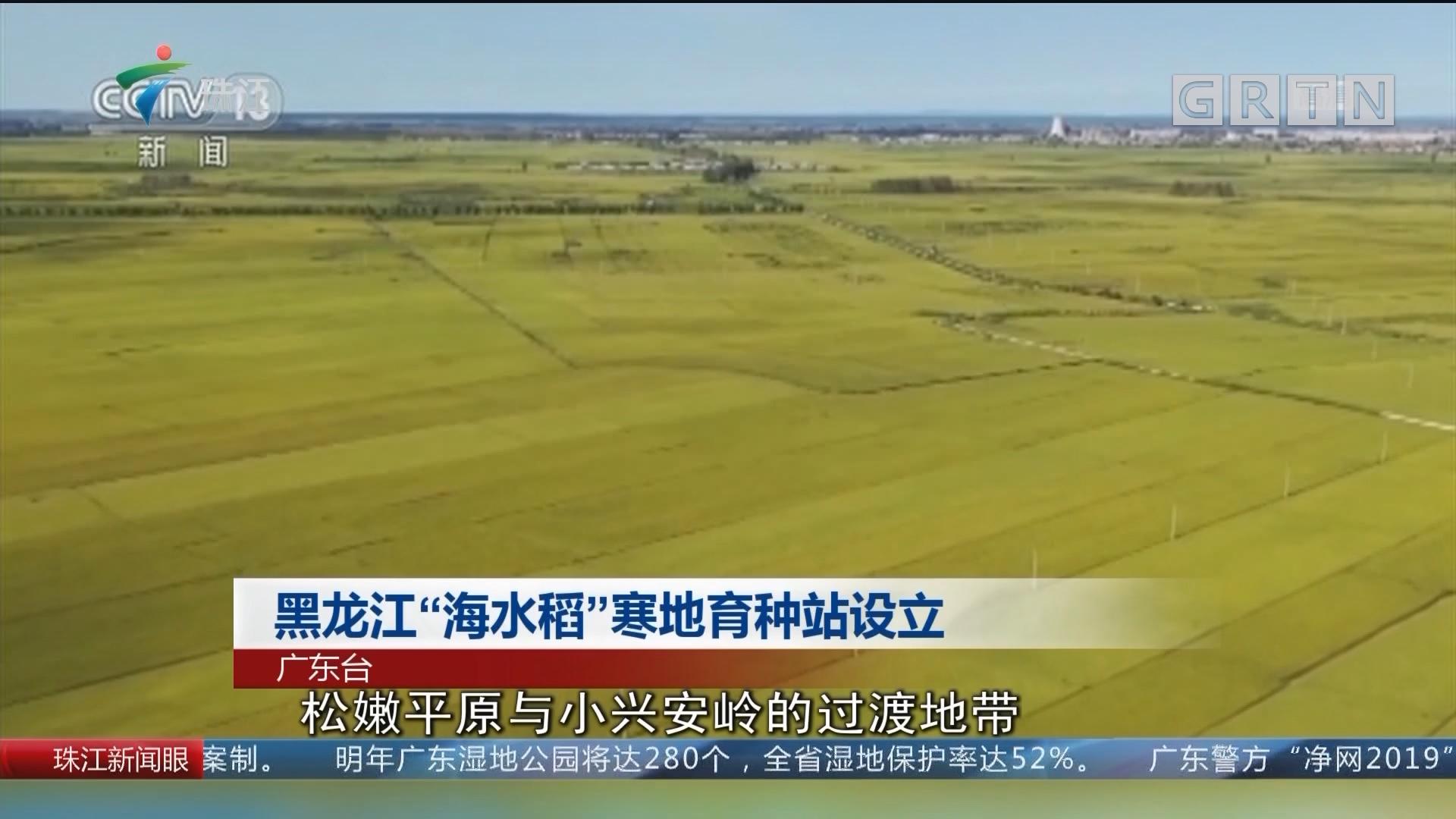 """黑龙江""""海水稻""""寒地育种站设立"""