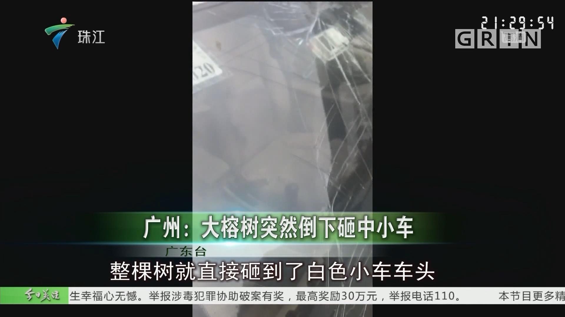 广州:大榕树突然倒下砸中小车