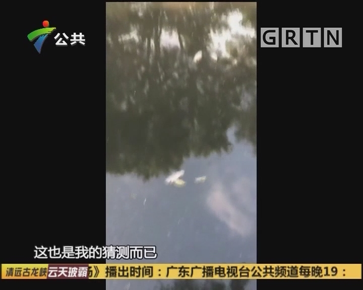 (DV现场)广州:施工污染河涌 水体黑臭漂死鱼