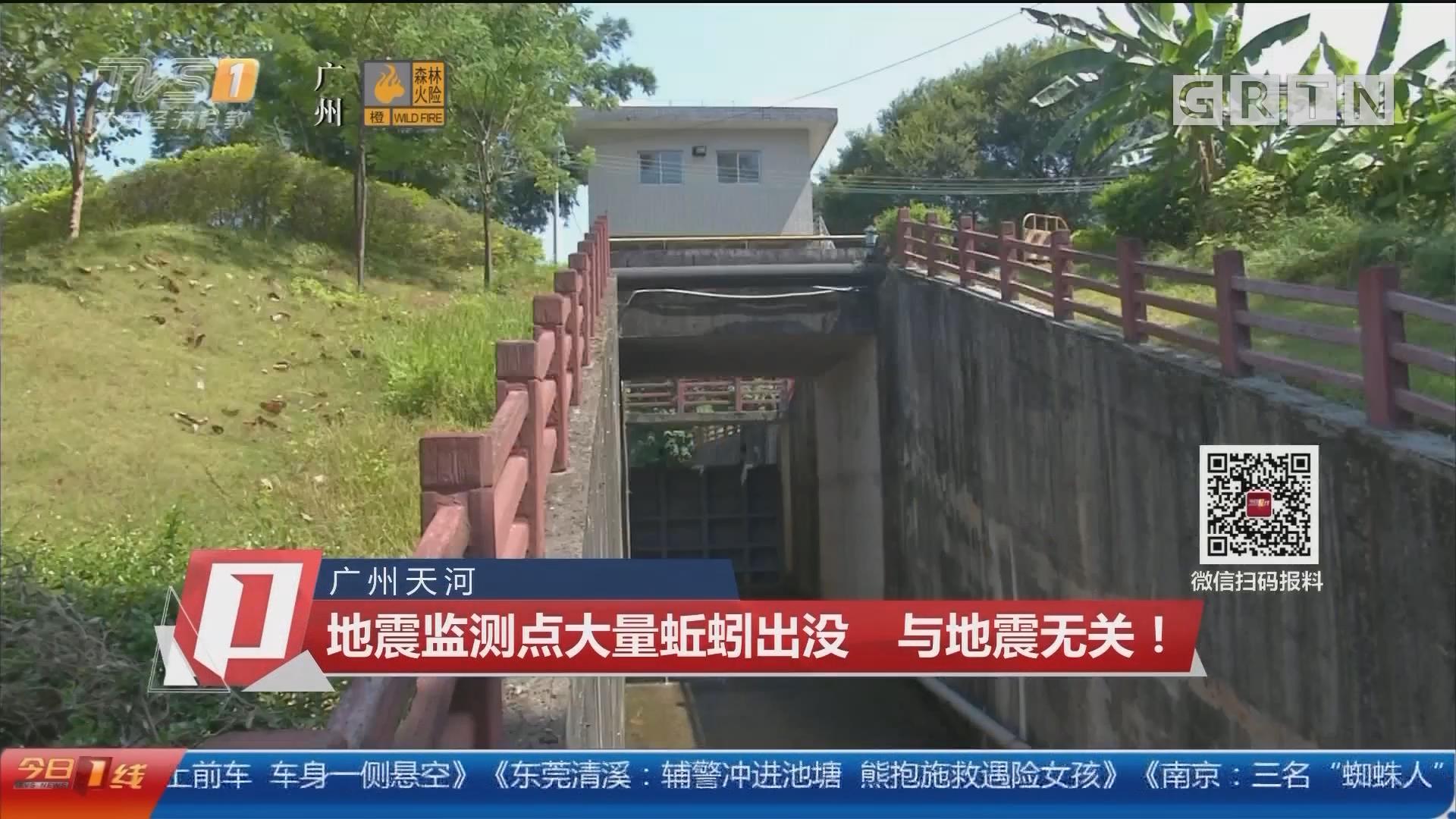 广州天河 地震监测点大量蚯蚓出没 与地震无关!