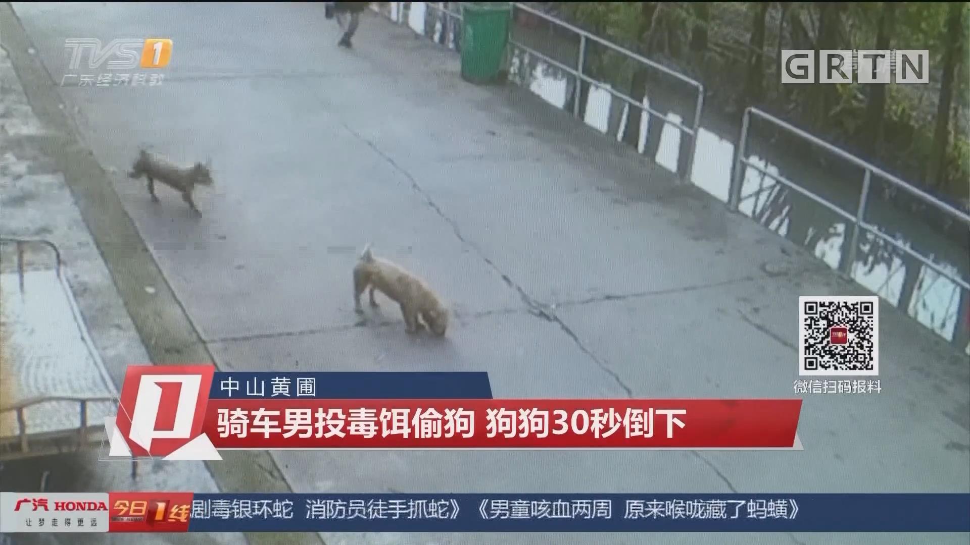 中山黄圃:骑车男投毒饵偷狗 狗狗30秒倒下