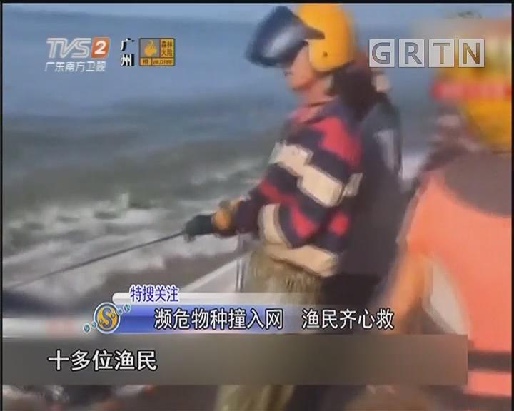 濒危物种撞入网 渔民齐心救