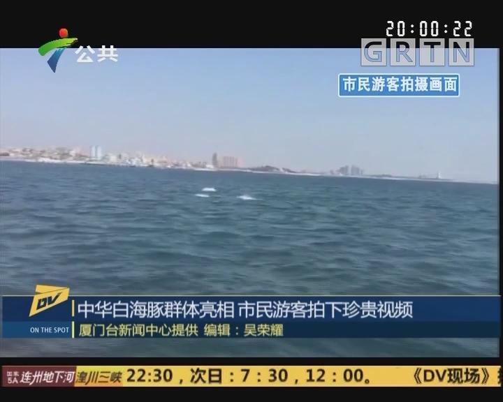 (DV现场)中华白海豚群体亮相 市民游客拍下珍贵视频
