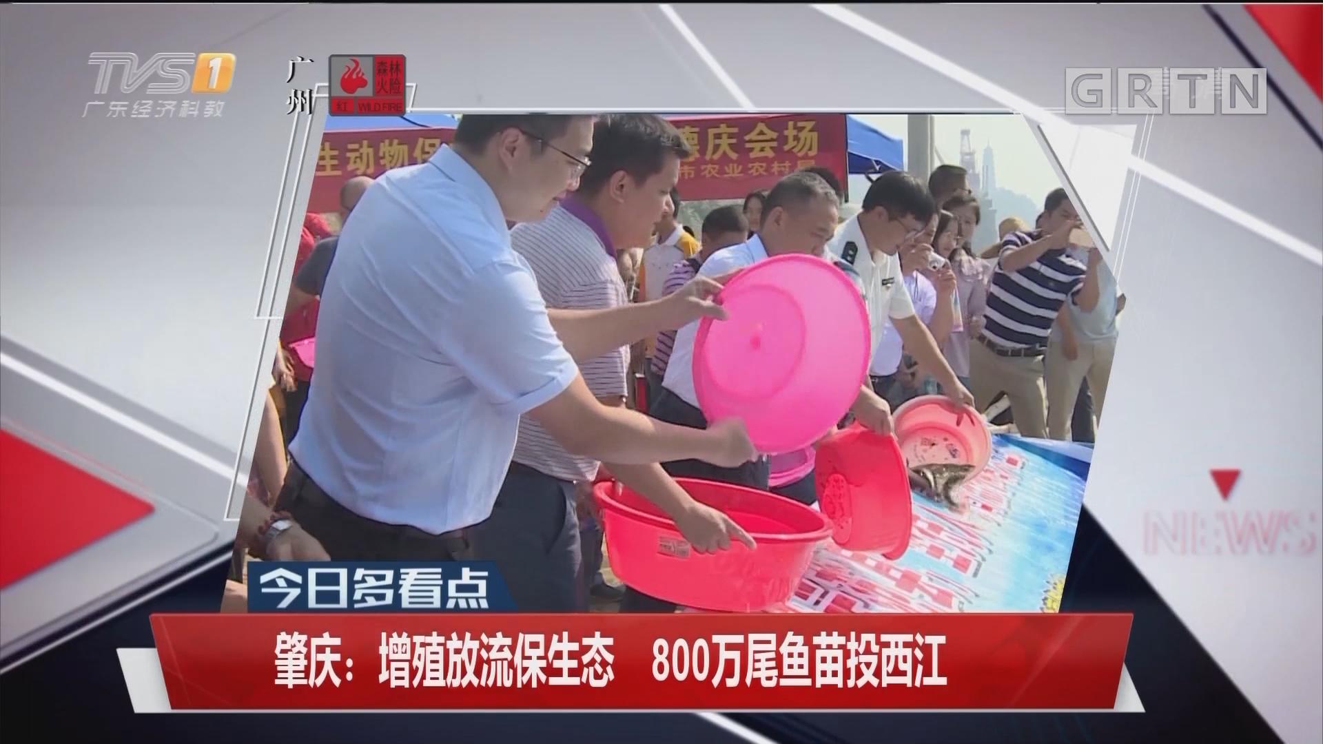 肇慶:增殖放流保生態 800萬尾魚苗投西江