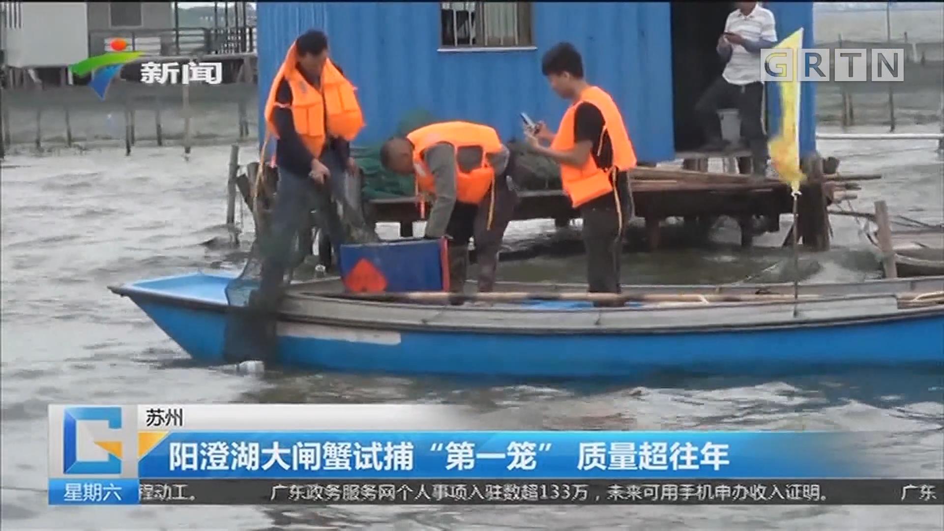 """苏州:阳澄湖大闸蟹试捕""""第一笼"""" 质量超往年"""