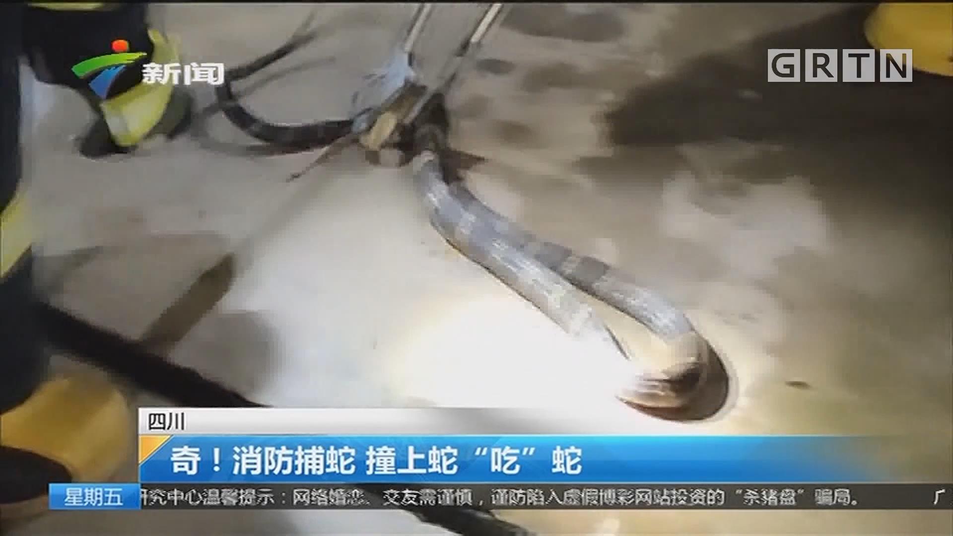 """四川:奇!消防捕蛇 撞上蛇""""吃""""蛇"""