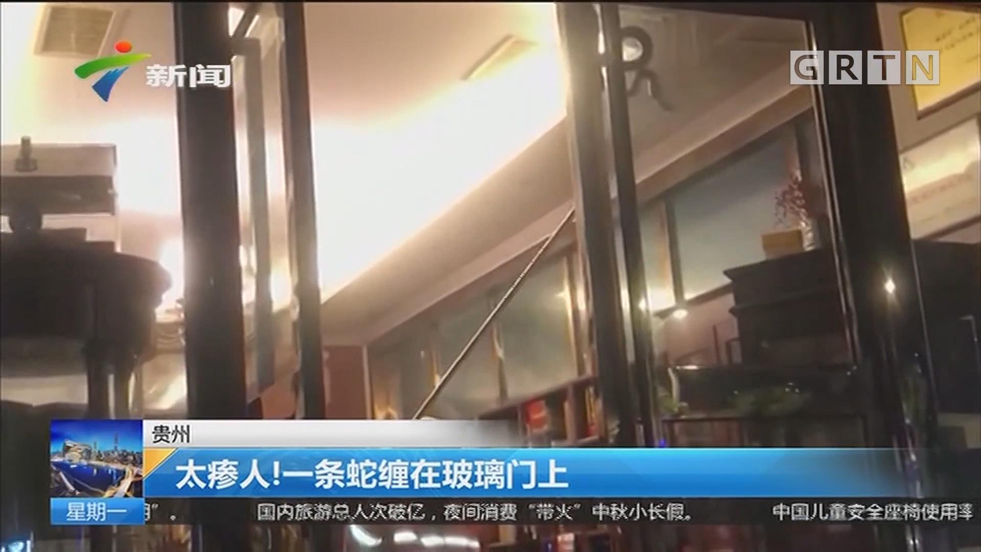 贵州:太瘆人!一条蛇缠在玻璃门上