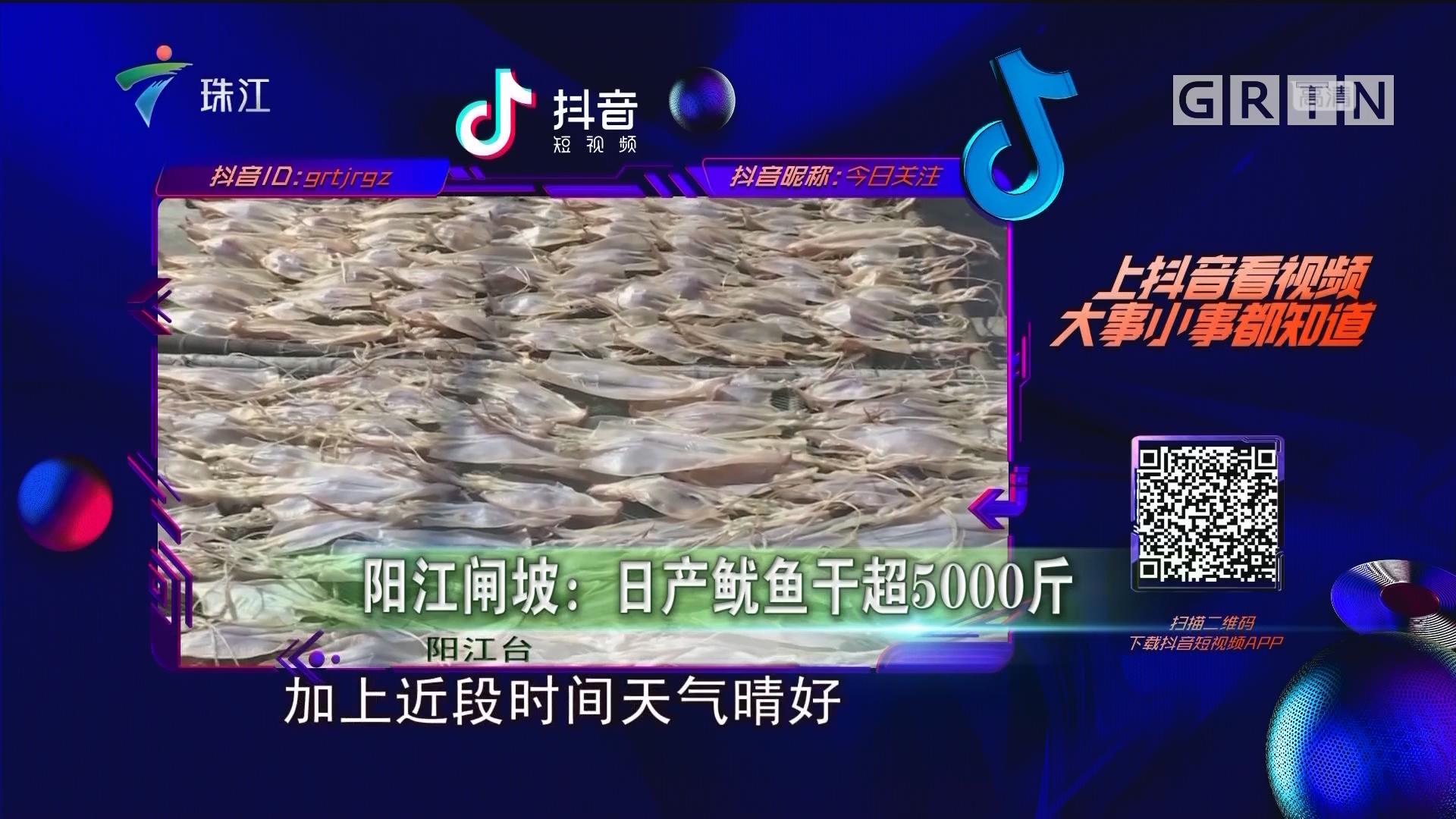 阳江闸坡:日产鱿鱼干超5000斤