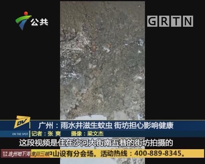 (DV現場)廣州:雨水井滋生蚊蟲 街坊擔心影響健康