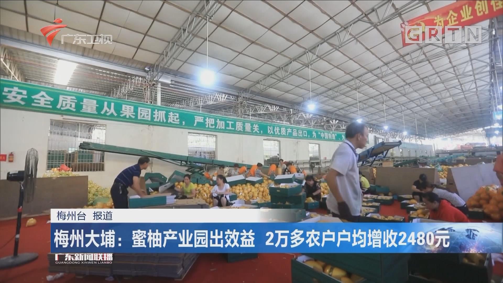 梅州大埔:蜜柚产业园出效益 2万多农户户均增收2480元