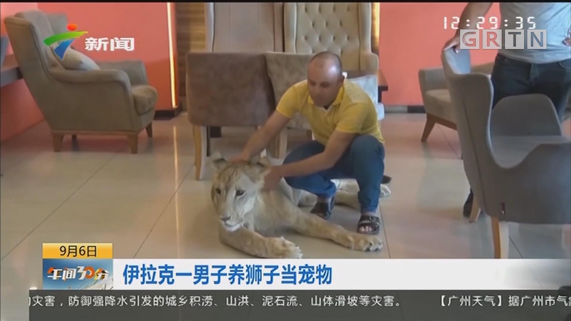 伊拉克一男子养狮子当宠物