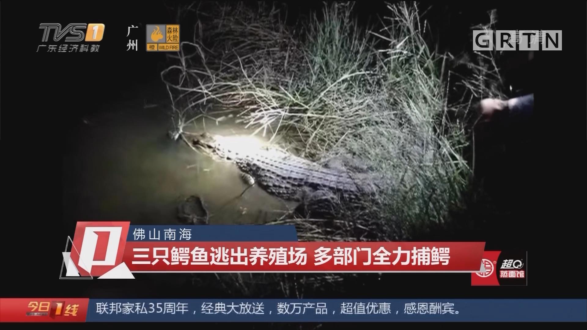 佛山南海:三只鳄鱼逃出养殖场 多部门全力捕鳄