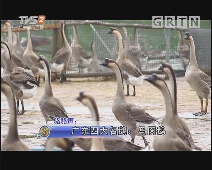 骆骆声 manbetx手机版 - 登陆四大名鹅:马冈鹅