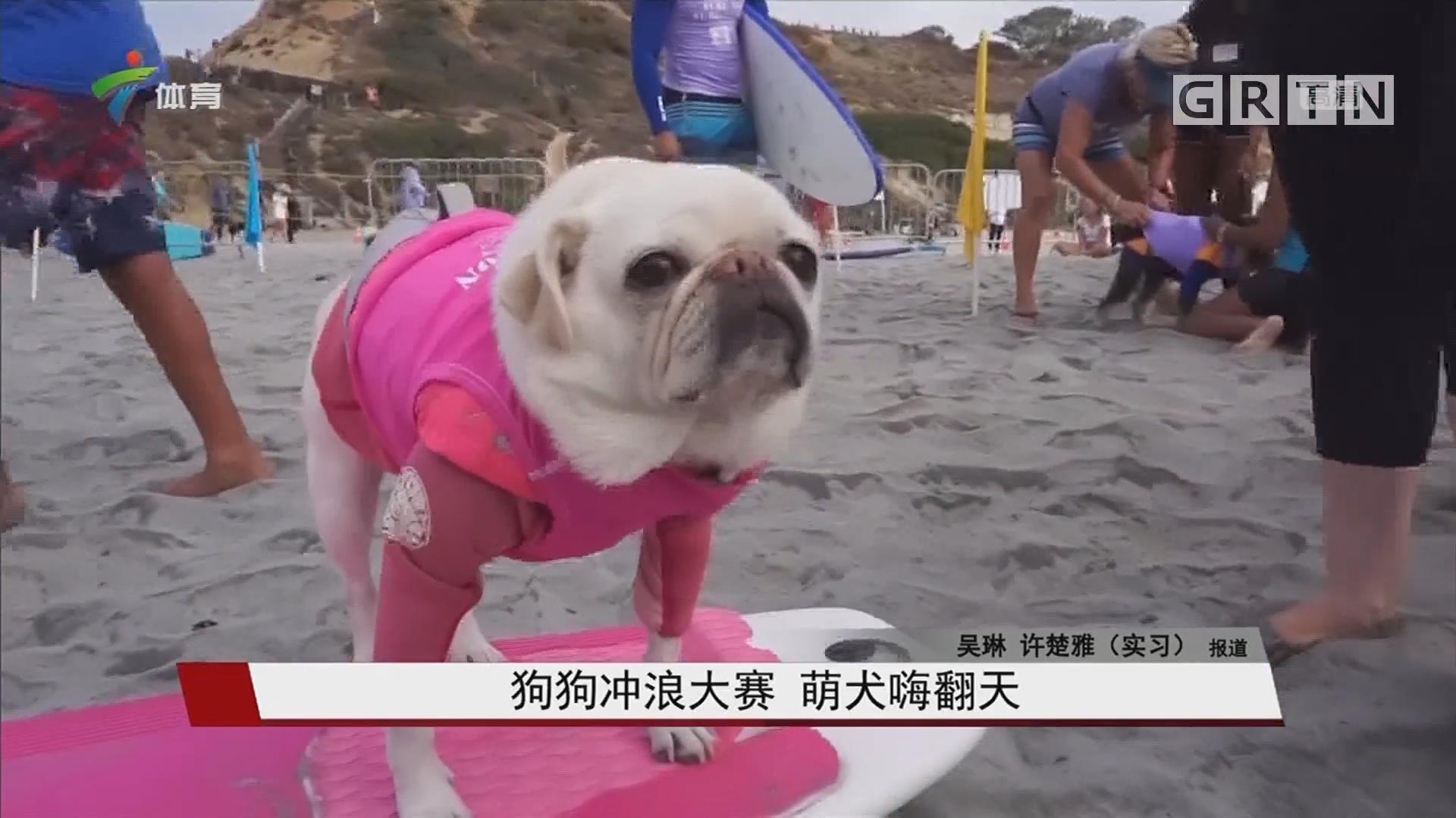 狗狗冲浪大赛 萌犬嗨翻天
