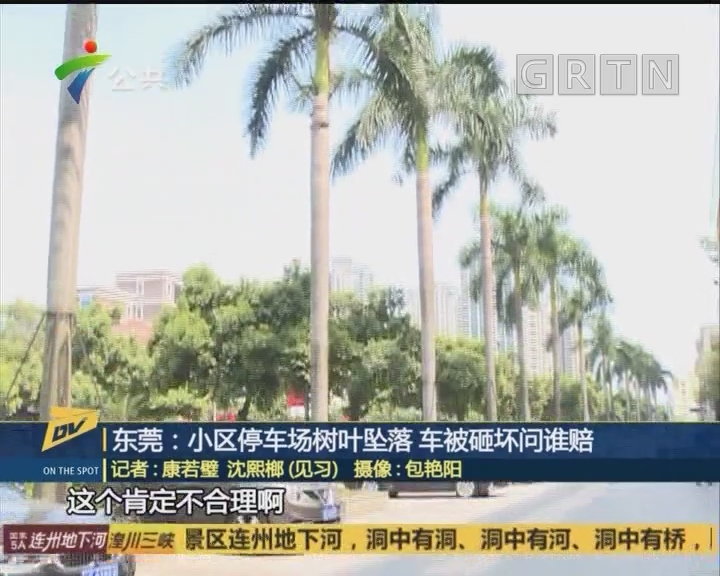 (DV現場)東莞:小區停車場樹葉墜落 車被砸壞問誰賠