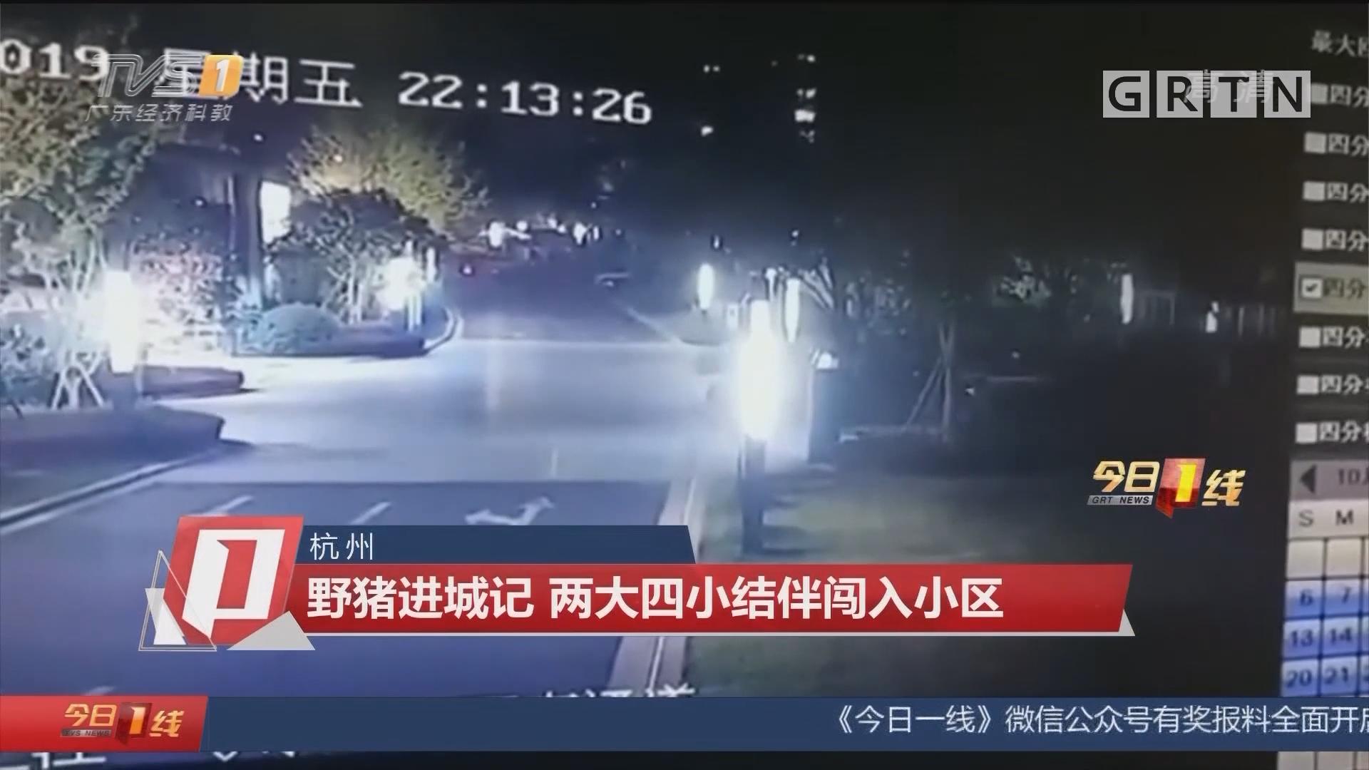 杭州:野猪进城记 两大四小结伴闯入小区