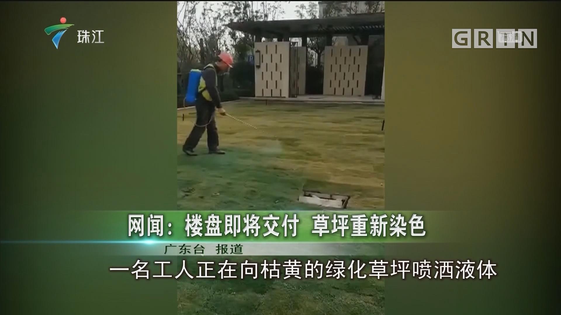 网闻:楼盘即将交付 草坪重新染色