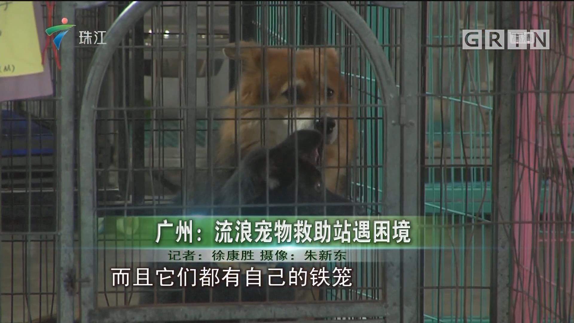 广州:流浪宠物救助站遇困境