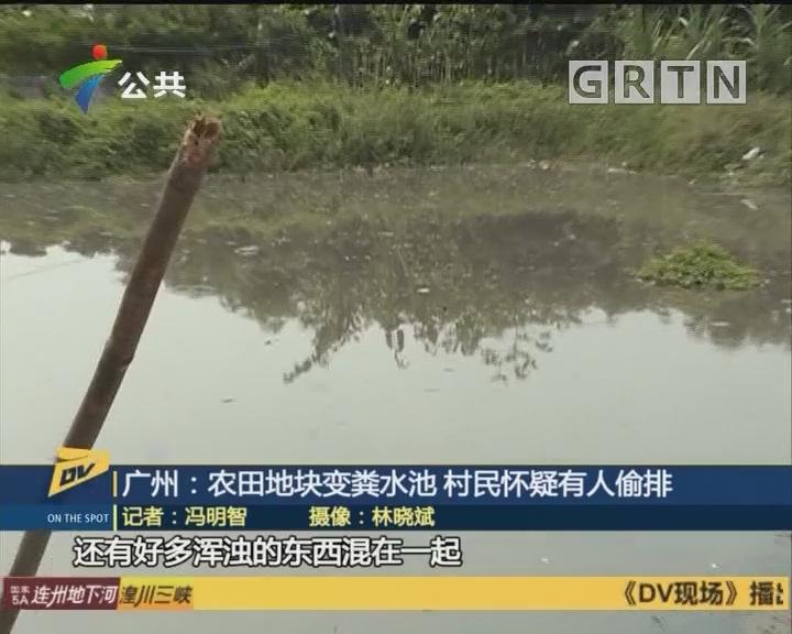 (DV现场)广州:农田地块变粪水池 村民怀疑有人偷排